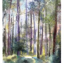 Haldon Forest, Devon